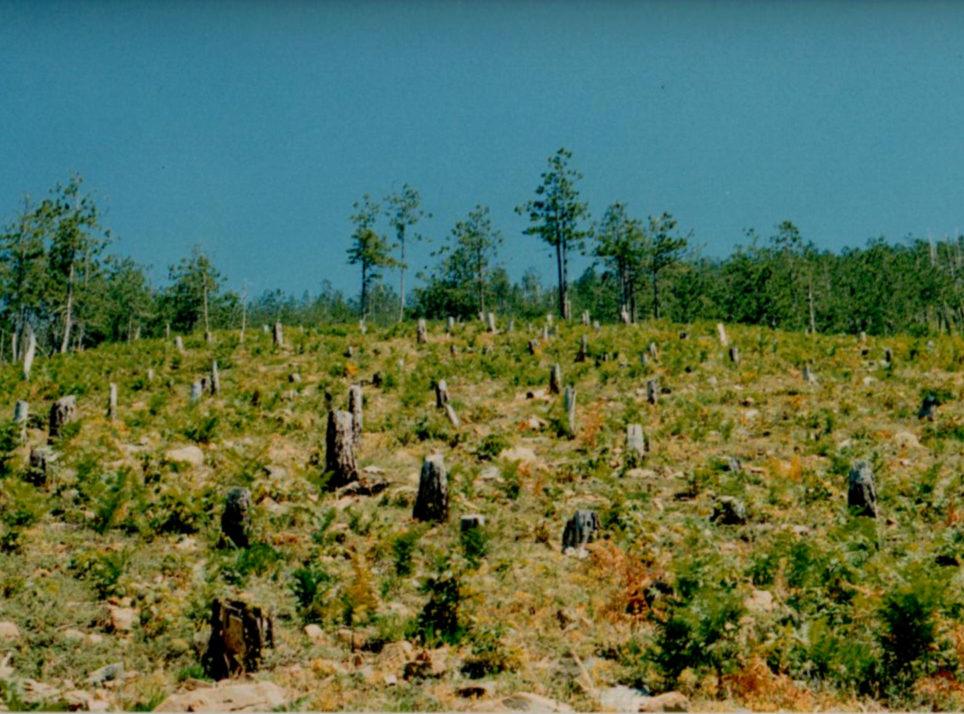 campi-e-alberi